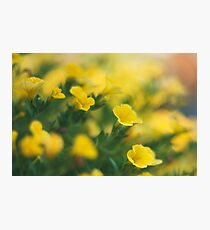 Soft focus of a yellow flower  Photographic Print