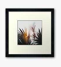 Flare #1 Framed Print