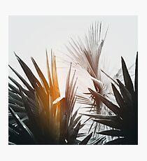 Flare #1 Photographic Print