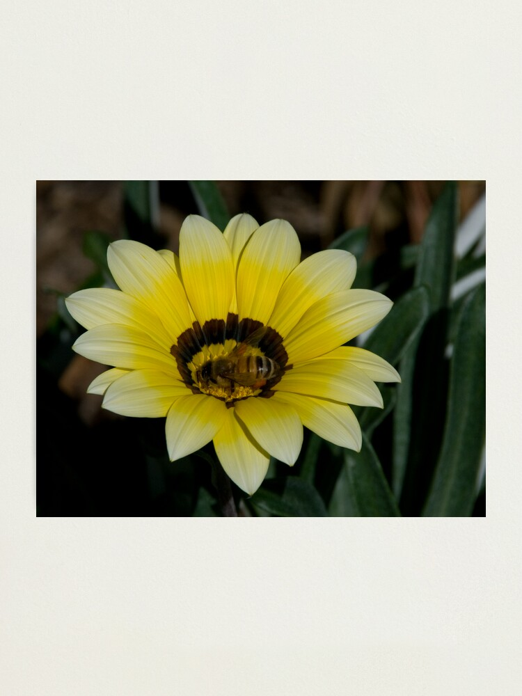 Alternate view of Bee Me Photographic Print