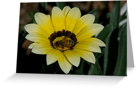 Bee Me by Ian Fraser