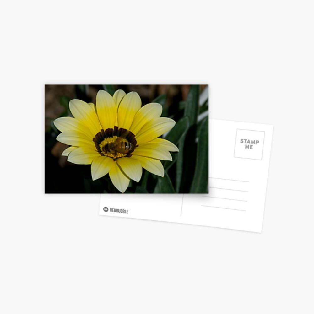 Bee Me Postcard