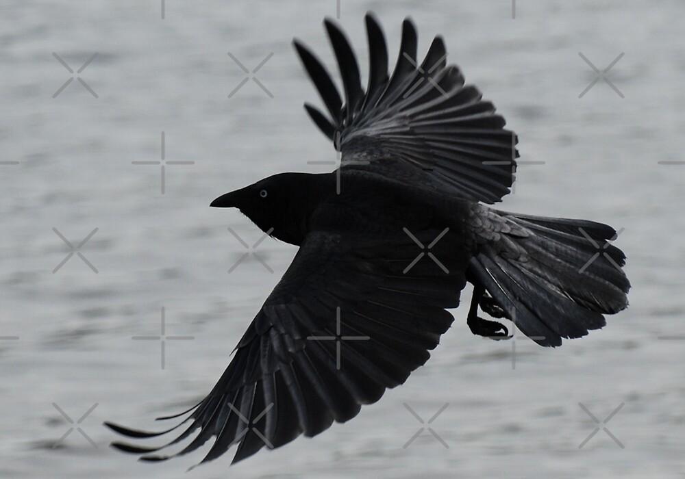 Black crow in flight. by Michelle *
