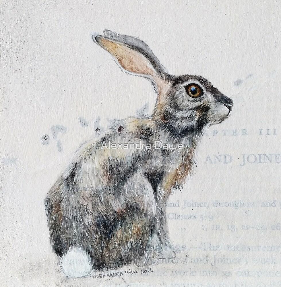 Hare by alexandradawe