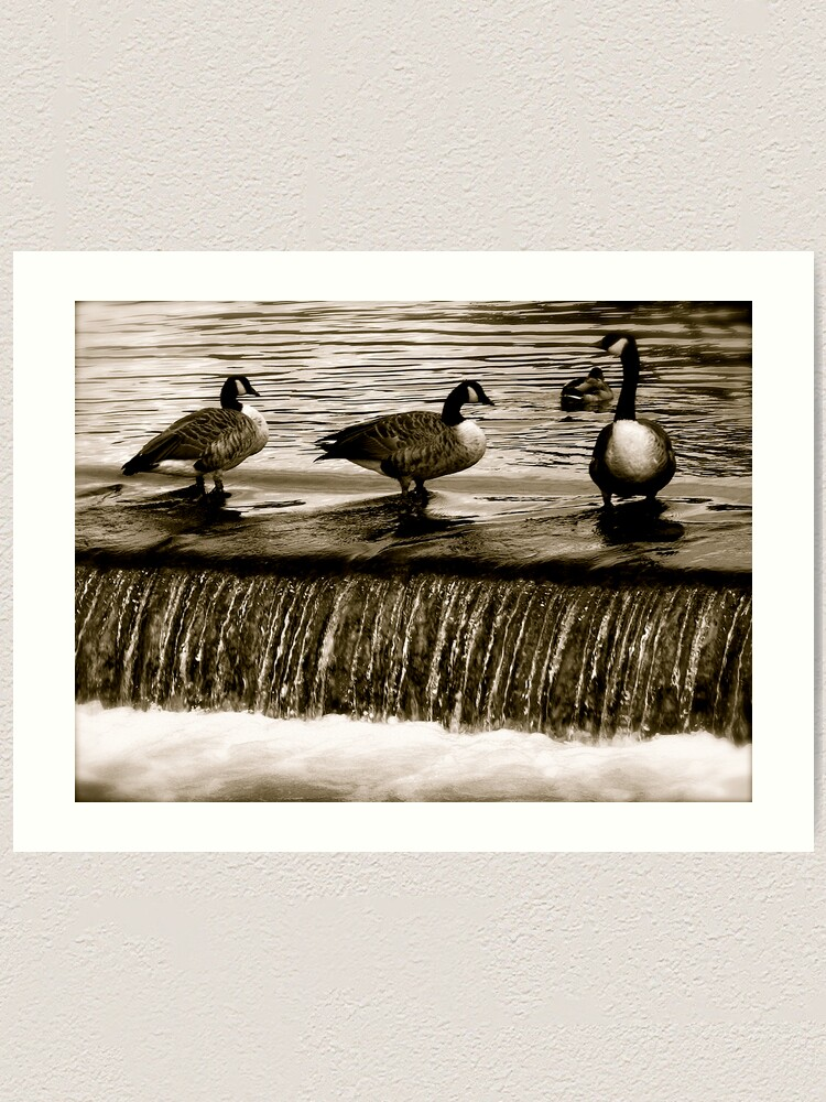 Alternate view of Hurry up you two... Art Print