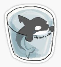 Orca Whale Killer Whale Sticker