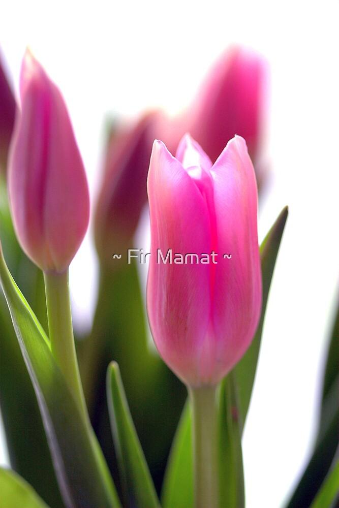 Pink Beauty by ~ Fir Mamat ~