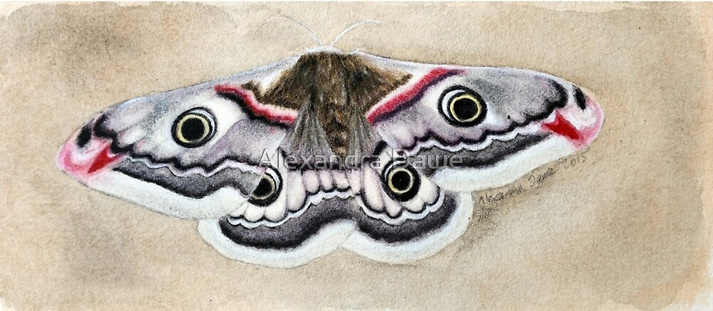 Emperor Moth by alexandradawe