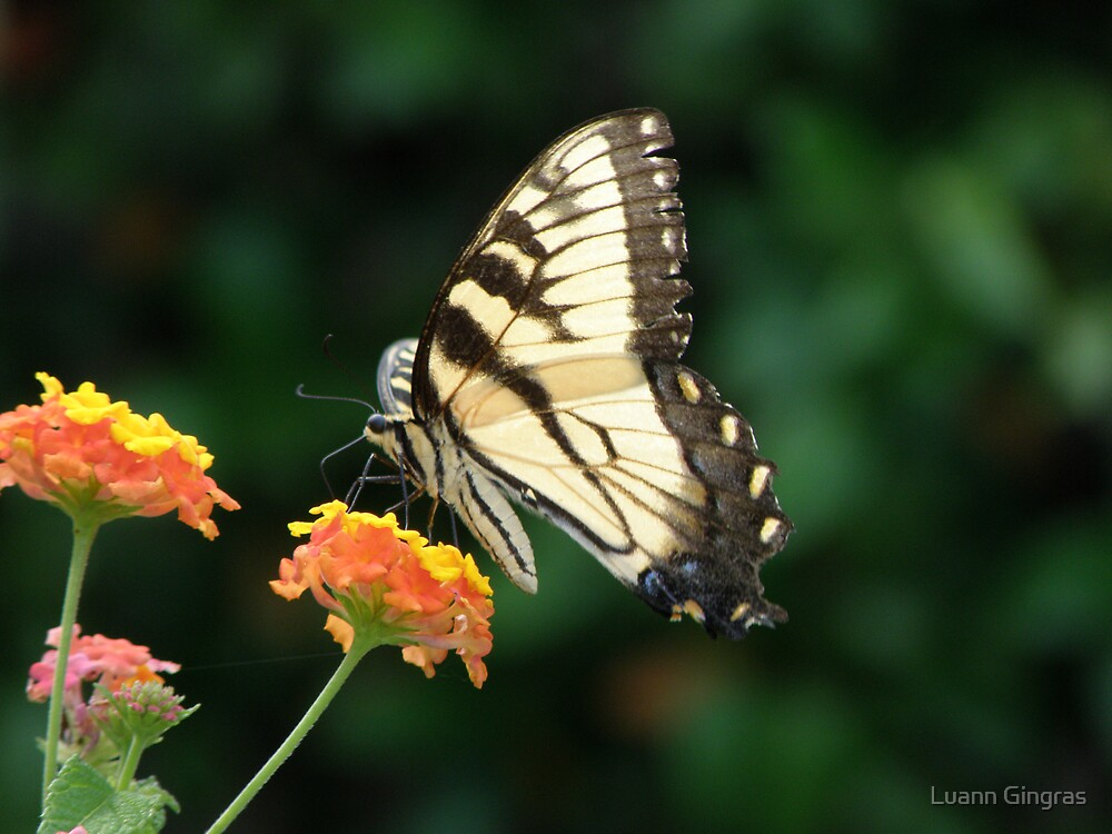Lunch by Luann Gingras