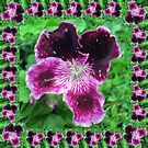 Violet Flower Power by Verangel
