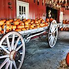 Pick your Pumpkin by Nadya Johnson