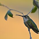 Ruby-throated Hummingbird by Gretchen Dunham