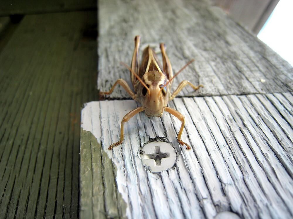 Screw the grasshopper by knottyboy