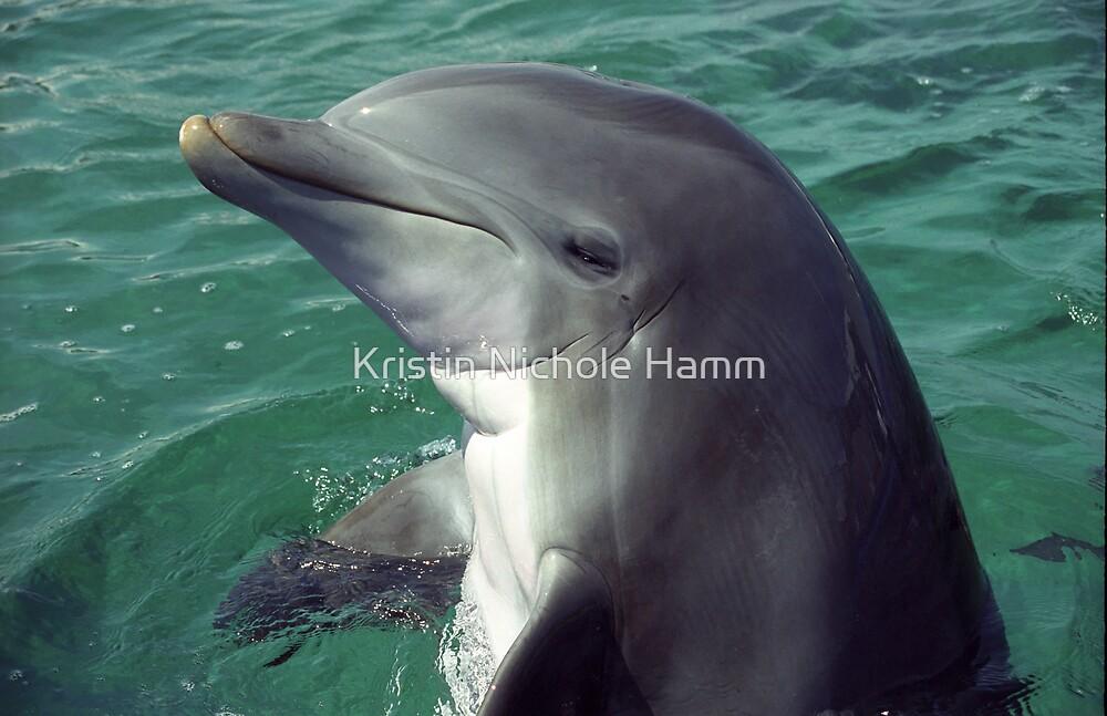 Bottlenose Dolphin by Kristin Hamm
