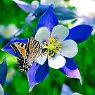 Columbine swallowtail by solareclips~Julie  Alexander