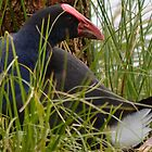 Nesting time by lizdomett