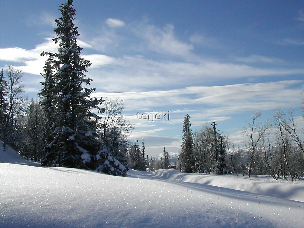 Nordic Winter  by terjekj