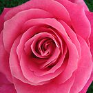Pink perfection by Maureen Brittain