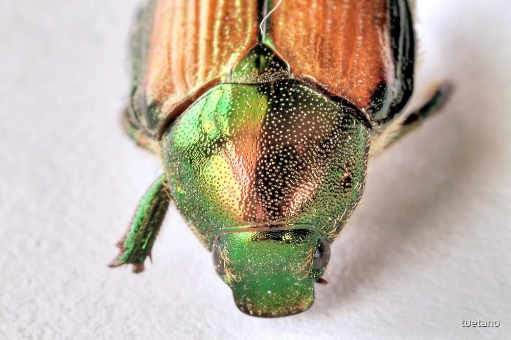 bug wars 8 by tuetano