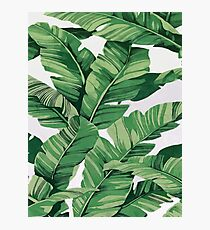 Tropical banana leaves VI Photographic Print