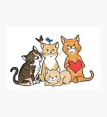 Four Kitties for Andrea Photographic Print