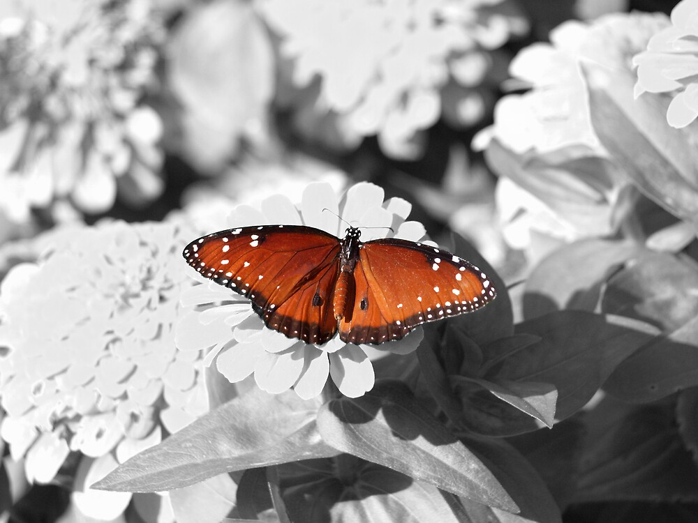 On Display - Selective Coloring Series by JThill