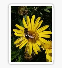 Visiting hoverfly Sticker