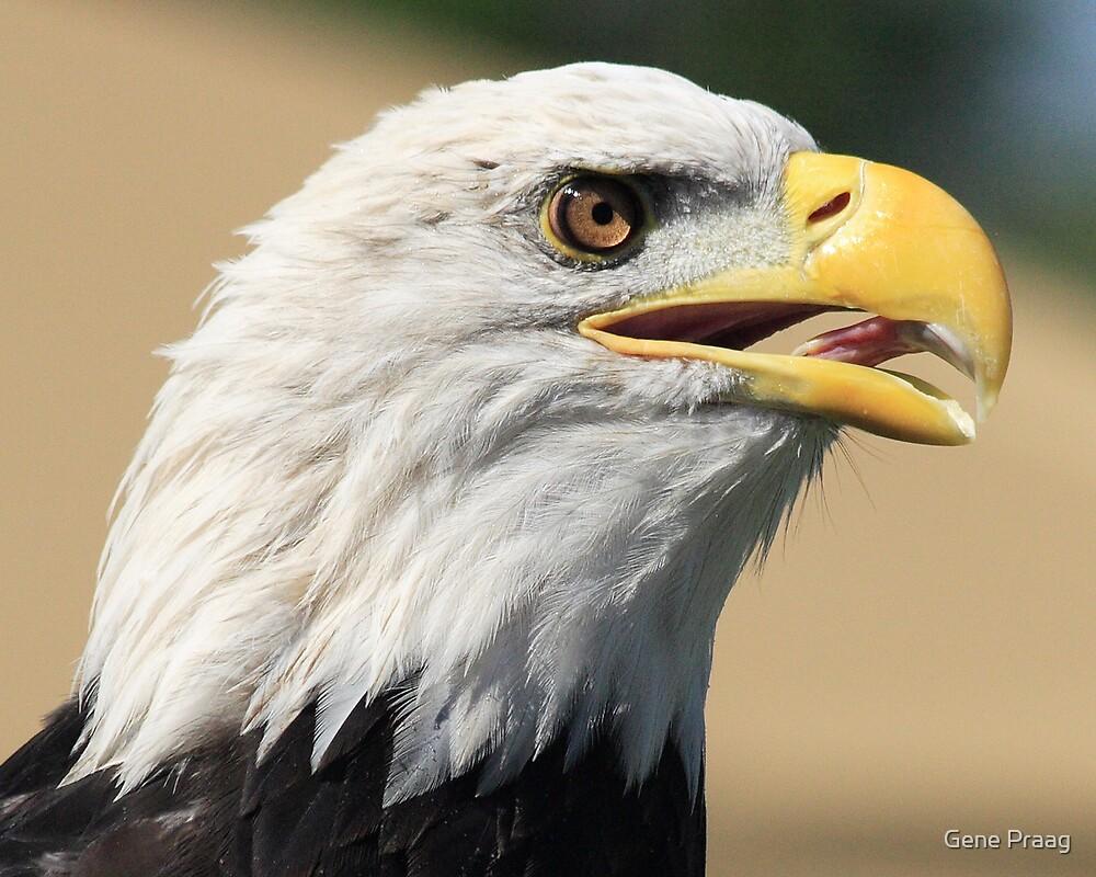 Eagle by Gene Praag