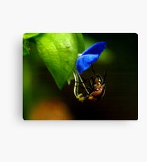 insect study Canvas Print