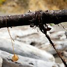 Seaweed On A Stick by Ashleigh Robb
