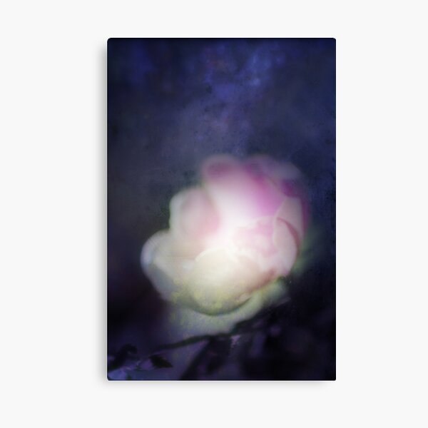 delicate pink old fashioned rose pattern 2 Canvas Print