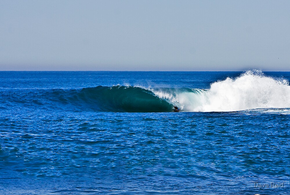 Shark Island - Cronulla by Dave Reid