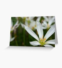 Pure Greeting Card