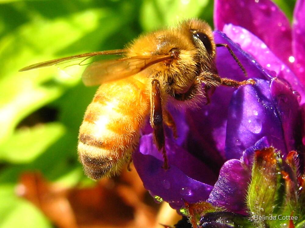 Bee on Babiana (Baboon flower) by Belinda Cottee