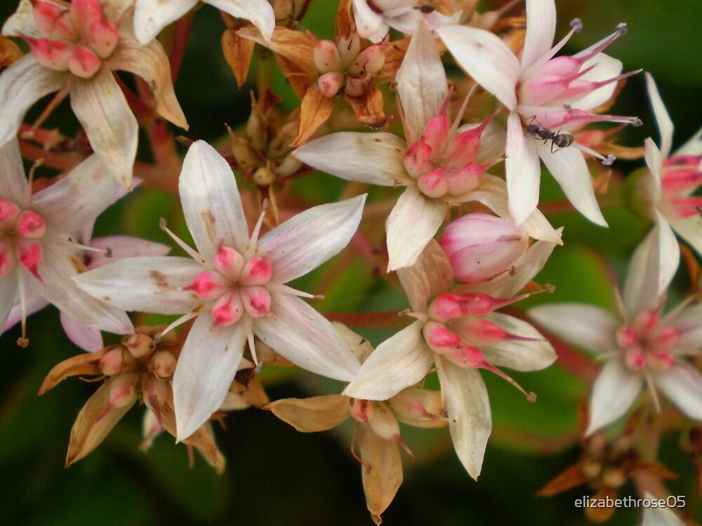 Ant in Flowers by elizabethrose05