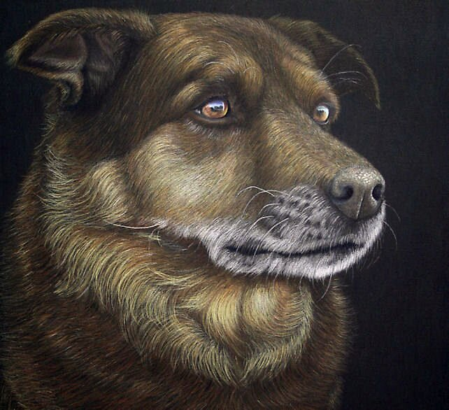 dog in color pencil by Rasberry6