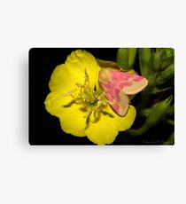 Pink on Yellow night time. Canvas Print