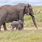 African Bush Elephant and her Baby by Yair Karelic