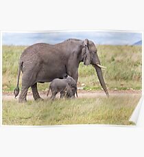 African Bush Elephant and her Baby Poster