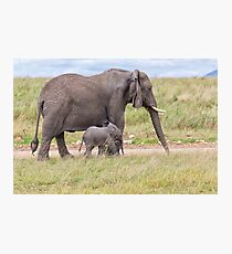 African Bush Elephant and her Baby Photographic Print