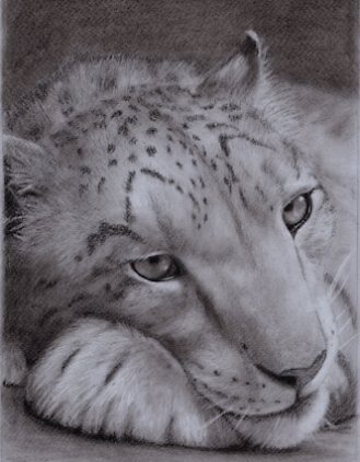 snow leopard in charcoal by Rasberry6