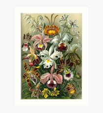 Orchidae - Art Forms of Nature Art Print