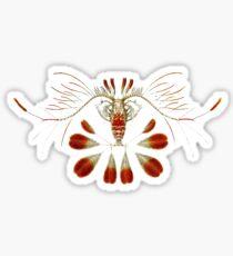 Copepoda Calocalanus - Art Forms of Nature Sticker