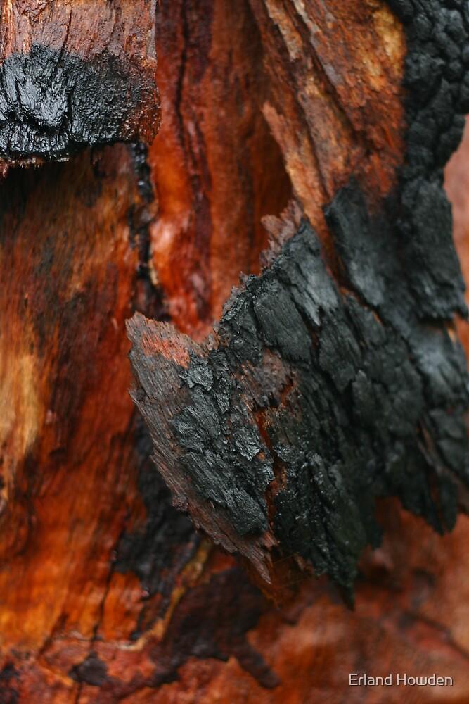 Eucalyptus Skin by Erland Howden