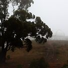A lone tree at Siding Spring Observatory by myraj