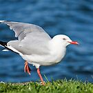 Seagull yoga 01 by kevin chippindall