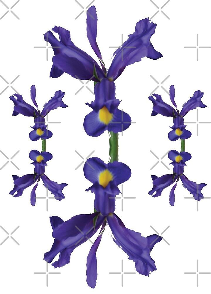 Blue Iris pattern by Braeburn65