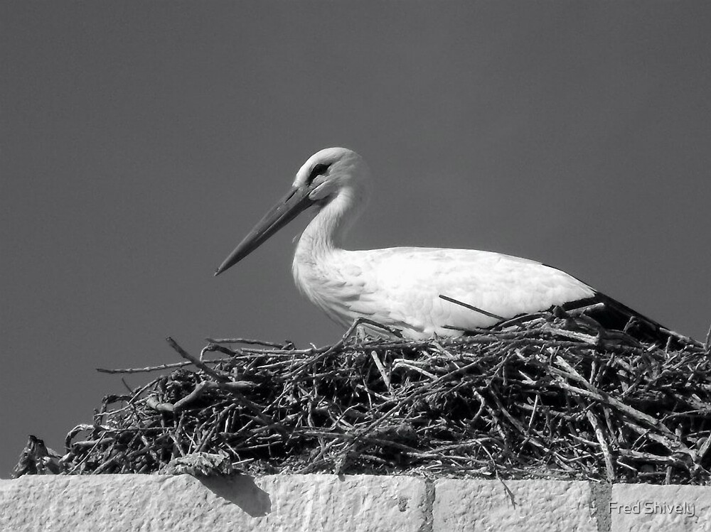 Stork, Faro, Portugal by Fred Shively