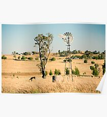 Cows and a windmill in the countryside. Poster
