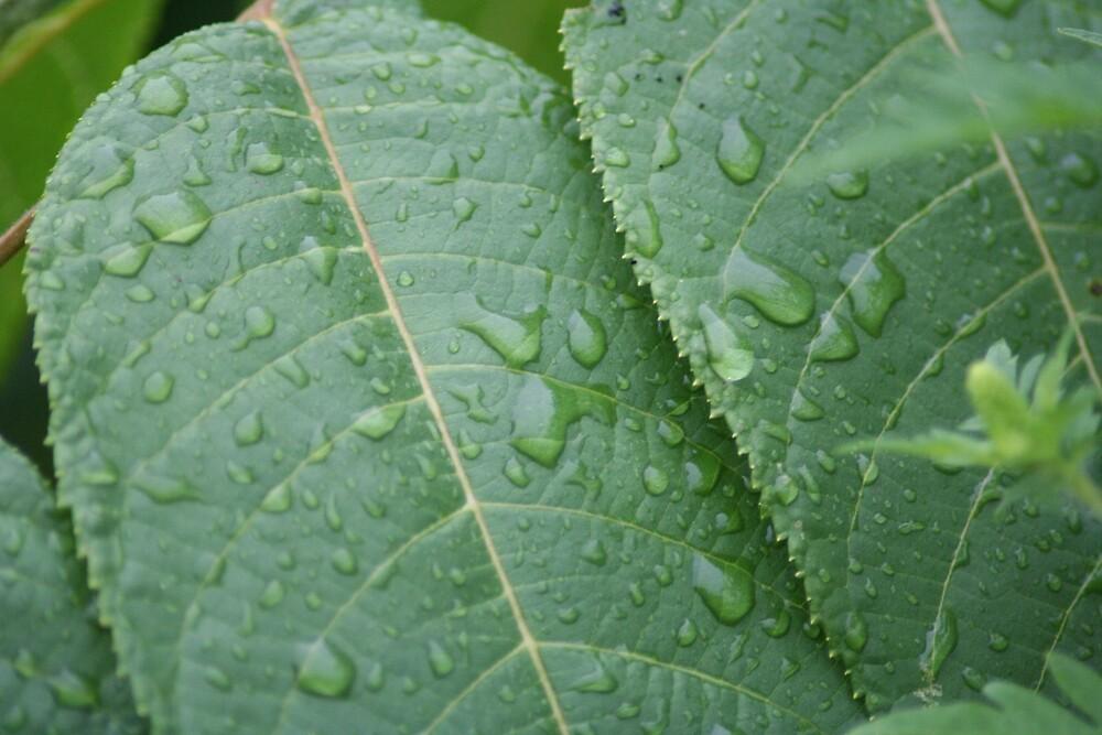 Rainy Day by Lori Walton